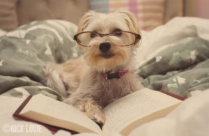dog reading a book with glasses
